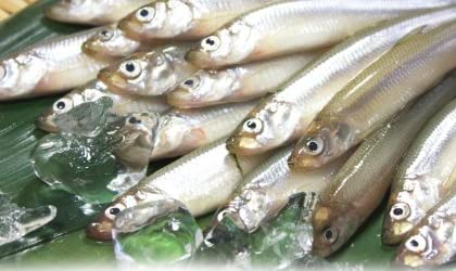 榛名湖のワカサギ、不漁で放射能検査ができずに解禁中止