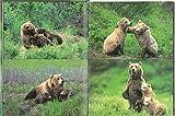 クマよ (たくさんのふしぎ傑作集) 画像