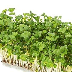 ブロッコリースプラウトエキスを使用した、優しいサプリメント【スルフォラファン】植物の栄養素を手軽に