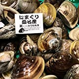 天然 桑名ハマグリ 最高級 蛤 豊洲直送 1キロ(1個約100g)【桑名はまぐり1K】冷蔵