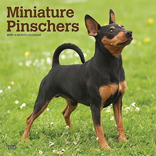 Miniature Pinschers 2019 Calen...