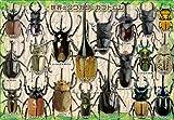 32ピース 子供向けジグソーパズル 世界のクワガタ・カブトムシ ピクチュアパズル