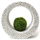 【eco-pochi】 苔ポチ×リングM 白 コケポチ こけぽち 観葉植物 苔玉 竹炭やシラスを使った観葉植物用ポッド