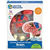 Learning Resources LER3335 Brain Model 3.8 inches tall