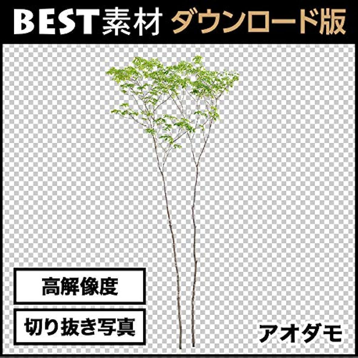 【BEST素材】高解像度の切り抜き写真_アオダモ02|ダウンロード版