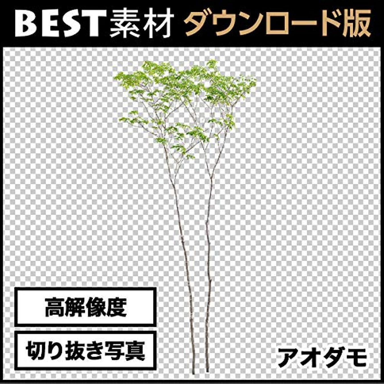 美徳カフェテリアフォーラム【BEST素材】高解像度の切り抜き写真_アオダモ02|ダウンロード版