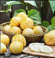 1600種:レモンキュウリの種(50-4000 1 / 4Lb)エアルームユニークな缶詰レアピクルスOp