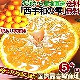 産地直送 西宇和の雫 愛媛 みかん 5kg 訳あり 柑橘 温州ミカン :蜜柑 3つの太陽マルチシート栽培