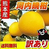 熊本産 訳あり 河内晩柑 5kg 【 九州 熊本 みかん ジューシーオレンジ バンカン 柑橘 オレンジ 】