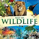 Best of Wildlife