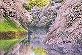 【Amazon.co.jp 限定】満開の桜咲く千鳥ヶ淵 ポストカード3枚セット P3-183