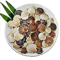 北海道産ベビーホタテ1kg 殻付き 国産 日本産 北海道産 ベビーホタテ ホタテ ほたて 小さいホタテ 魚介類 生鮮食品