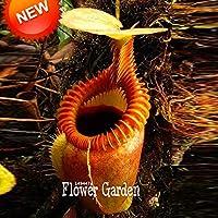 新新鮮な種子50種子/ロットネペンテス種子フライトラップバルコニー鉢植え盆栽植物種子盆栽肉食植物、#Ub8Hwf