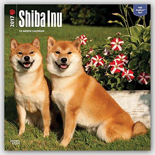 Shiba Inu 2017 Calendar