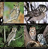 National Audubon Society Field Guide to North American Birds--E: Eastern Region - Revised Edition 画像