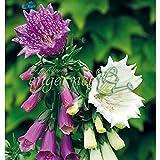 ジギタリス・パープレア:モンストローサ3号ポット 3株セット[ユニークな花を咲かせるジギタリス] ノーブランド品