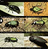 National Audubon Society Field Guide to Insects and Spiders: North America (National Audubon Society Field Guides) 画像
