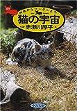 猫の宇宙—向島からブータンまで (中公文庫)