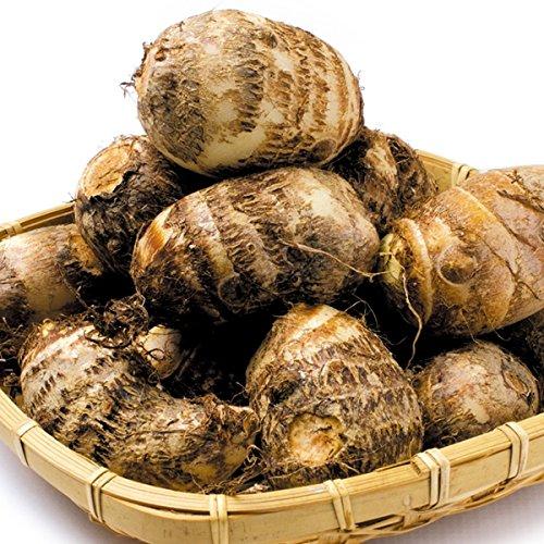 国華園 種いも 里いも 土垂 里芋 3㎏ / 種芋 たねいも さといも【※発送が国華園からの場合のみ正規品です】