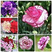 ミックス:熱い販売アジアの珍しいカーネーションの種子花の種20種盆栽の種100個