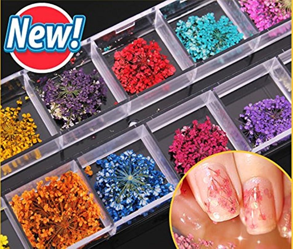 ぎこちないジャーナルポンプドライフラワー ネイル押し花 60枚セット 生花の押し花 透明収納ケース付き ネイル飾り レジン 上質 DIY飾り