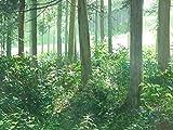 透明水彩レシピ3 樹木を描く (JWS透明水彩レシピ) 画像