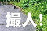 とりんちゅ!: 宮崎旅情編
