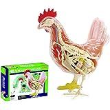 解剖学模型玩具 動物の解剖学のおもちゃ 教育 鶏の解剖模型のおもちゃ 23個の完全に取り外し可能な部品 と展示スタンド 子供向けチキンモデル