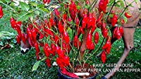 Portal Cool Hot Paper Lantern Pepper Seeds! Loads of Beautiful Hot Peppers! Comb. S/H!
