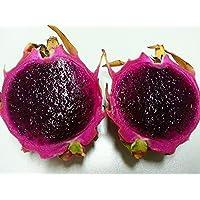 無料の船は稀な赤いピタヤの種子、非常においしいフルーツの種子ドラゴンフルーツの種子を40seeds