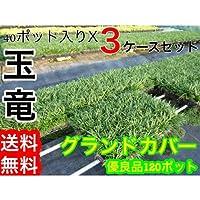 【ノーブランド品】タマリュウ/7.5cmポット【120本セット】
