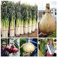 発芽SEEDS:ブラック:Bでは100個レアジャイアントニンニク中国グリーンオニオンの野菜の種鉢植えニラ種子