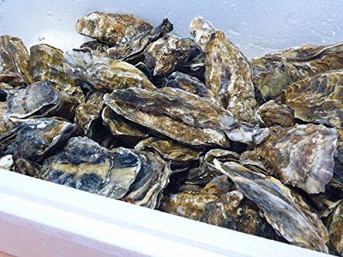 『北海道・生牡蠣(かき)(殻付き)牡蠣・厚岸西岸 仙鳳趾【牡蛎】訳あり8キロ【生食用】』のトップ画像