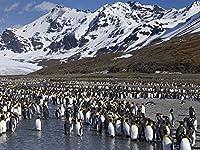 芸術はポスターを印刷します - ペンギンセット山水雪 - キャンバスの 写真 ポスター 印刷 (80cmx60cm)