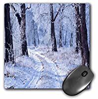 3drose LLC 8x 8x 0.25インチマウスパッド、Enchanted Forest (MP 97822_ 1)