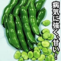 【メール便配送】国華園 野菜たね ソラマメ 陵西一寸 1袋(50ml入)【※発送が国華園からの場合のみ正規品です】