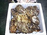 【広島県玖波産】【アミスイ】殻付き牡蠣20個