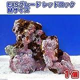 (海水魚)ライブロック EXSグレード レッドロック Mサイズ(1個)(形状お任せ) 本州・四国限定[生体]