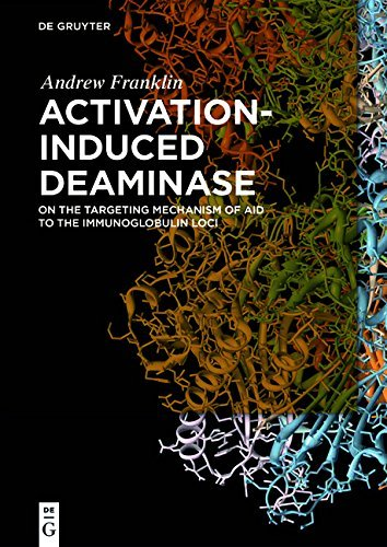 Activation-Induced Deaminase: On the Targeting Mechanism of AID to the Immunoglobulin Loci