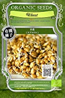 【有機種子】 小麦(スプラウト) グリーンフィールドプロジェクトのタネ