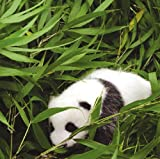 パンダカレンダー 画像