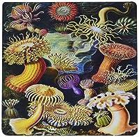 3drose LLC 8x 8x 0.25インチマウスパッド、有名なドイツ1800s Biologist Illustration of Sea Life ( MP _ 98543_ 1)