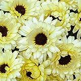 国華園 花たね キンセンカ スノープリンセス 1袋(20粒)【※発送が国華園からの場合のみ正規品です】