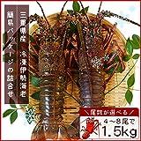 三重県産 伊勢海老詰合せ 6尾で約1.5kg 刺身用瞬間冷凍 伊勢エビ 尾数選べます