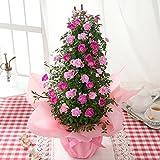 BunBunBee 母の日 ローズ鉢・タワー5号「舞姫グラデーションピンク」