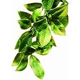 Exo Terra Plastic Terrarium Plant Small Mandarin