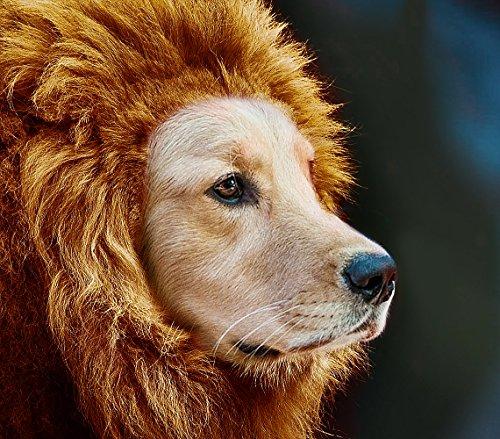 ライオン たてがみ 犬用コスチューム 犬ネックウォーマー ライオン帽子 被り物