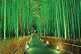 2016ピース ジグソーパズル パズルの超達人 明かりの灯る竹林-嵯峨野 ベリースモールピース(50x75cm)