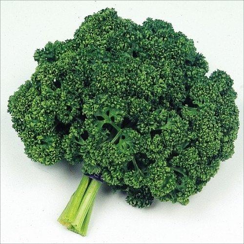 【メール便配送】国華園 野菜たね 健康野菜 パセリー 1袋(6ml)【※発送が国華園からの場合のみ正規品です】