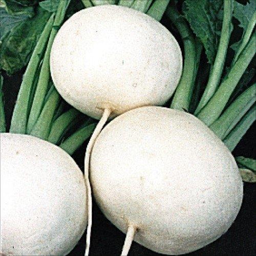 【メール便配送】 国華園 野菜たね カブ 春蒔白大かぶ 1袋(10ml)【※発送が国華園からの場合のみ正規品です】